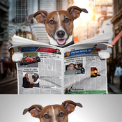 Dog newspaper mock up 12723946 icon